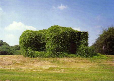 Willam Christenberry - Kudzu