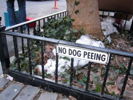 no dog peeing