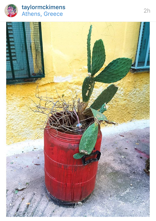 Taylor-mcKimens-cactus-photo-=-greece